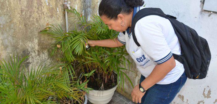 Salvador registra redução do índice de infestação do Aedes aegypti