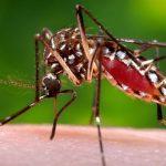 Salvador permanece em alerta para epidemia de dengue, zika vírus e chikungunya