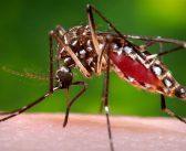 Combate ao Aedes: Prefeitura realiza entrega de capas para cobertura de caixas d'água em Salvador