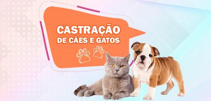 castracao_caes_e_gatos_2018