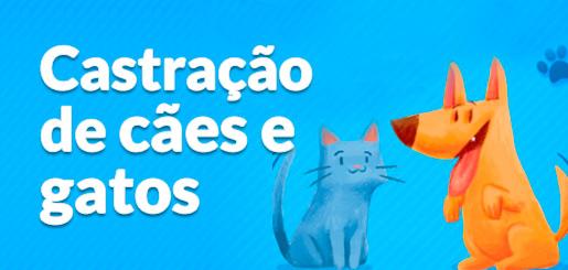 castracao-caes-gatos