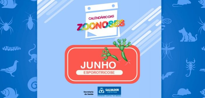 Prefeitura intensifica ações de controle à esporotricose em Salvador