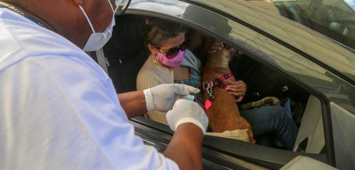 Quase sete mil animais são vacinados via sistema drive thru