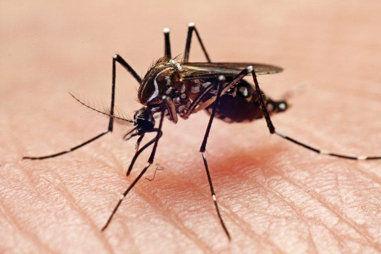mundo-dengue-aedes-aegypti-20110116-009-768x512